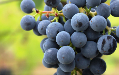 story-natural-wines